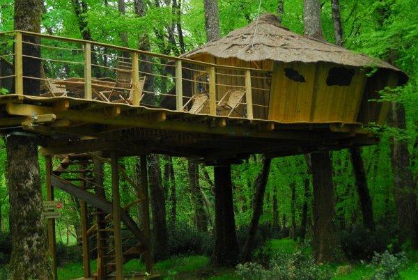 Cabane arbre angers