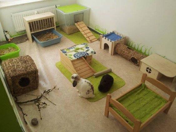 Cabane pour lapin interieur