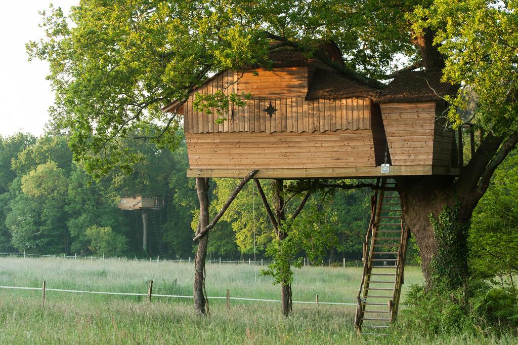 Cabane dans les arbres yourte