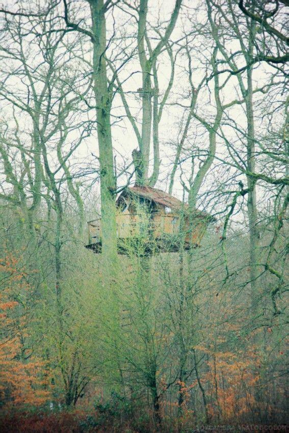 Cabane dans les bois fontainebleau