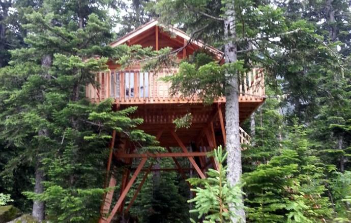 Cabane arbre location