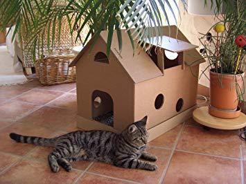Cabane à chat