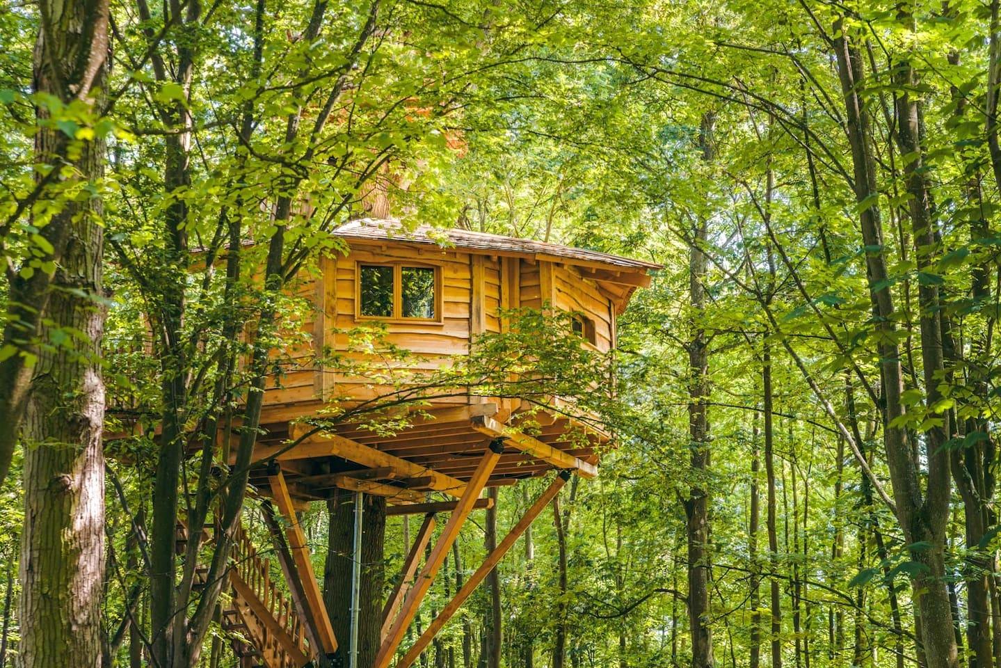 Cabane arbre honfleur