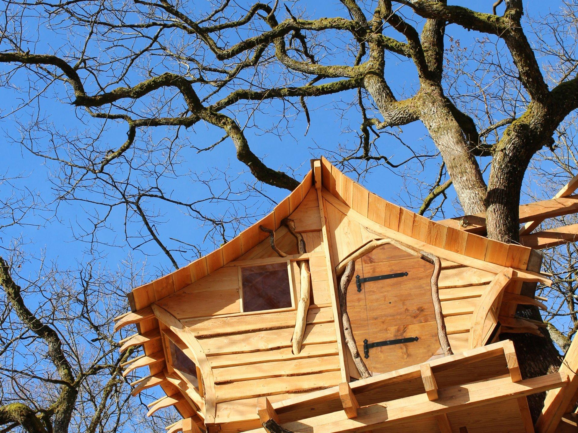 Cabane dans les arbres grand est