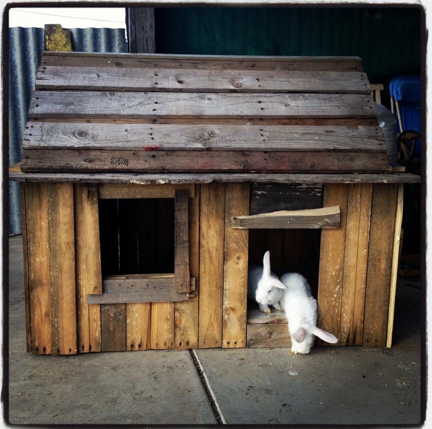 Cabane en palette pour lapin