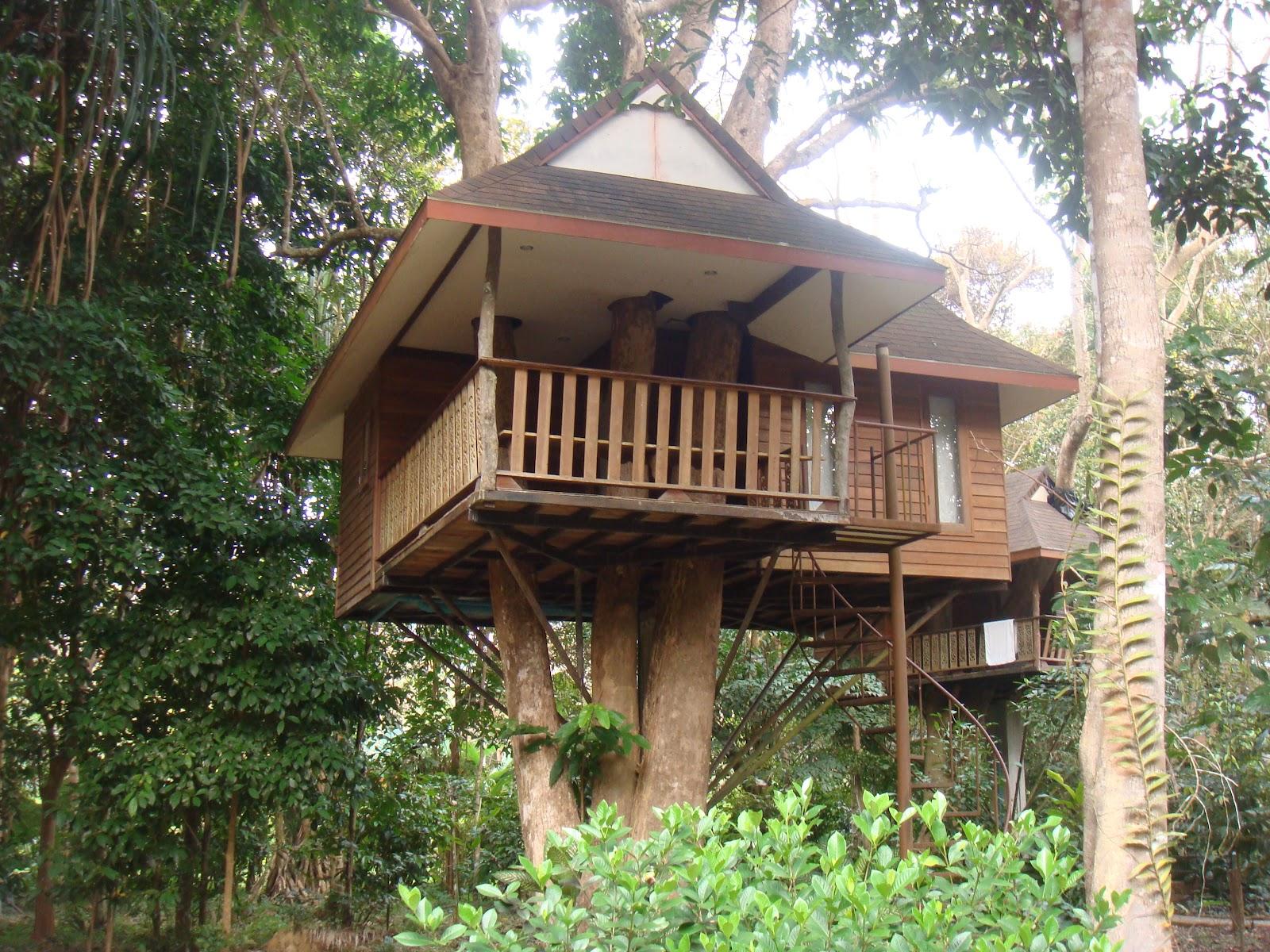 Cabane dans les arbres khao sok
