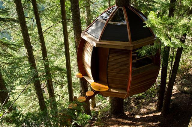Cabane en bois foret