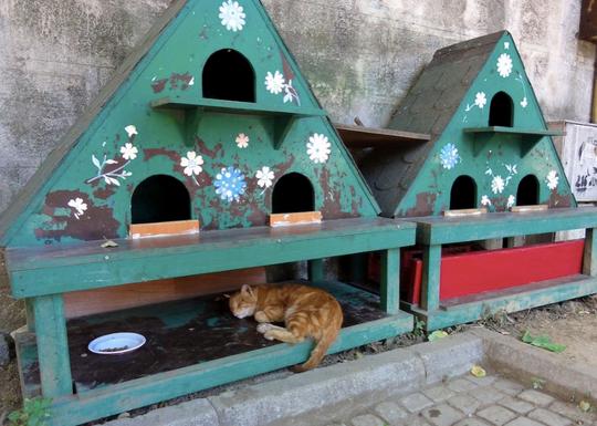 Cabane chat dehors