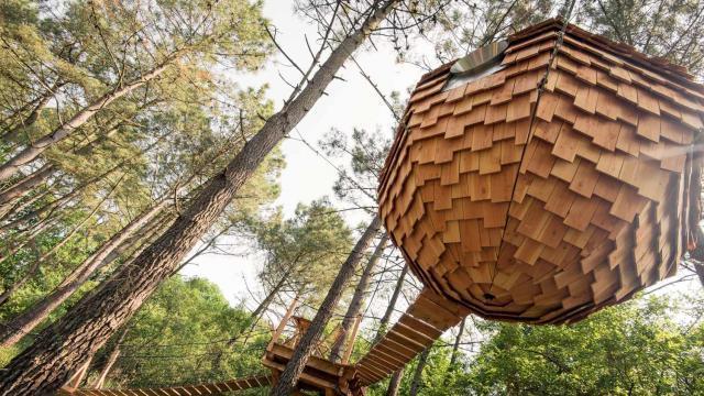 Cabane arbre vannes