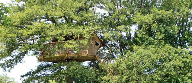 Cabane dans les arbres mayenne