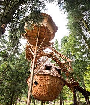 Cabane dans les bois pas de calais