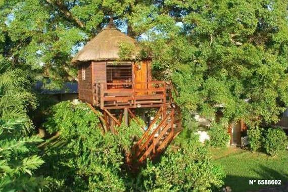 Cabane dans un arbre a louer