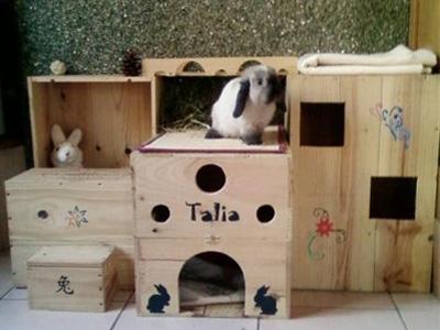 Faire une cabane en carton pour lapin