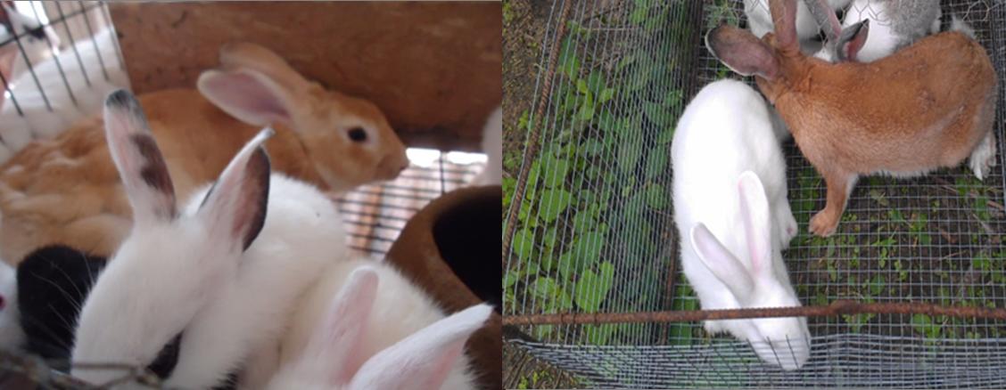 Cage a lapin galvanisé