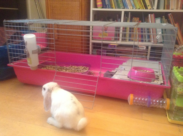 Cage a lapin rose