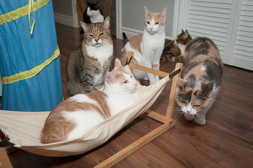Cabane à chat cowansville
