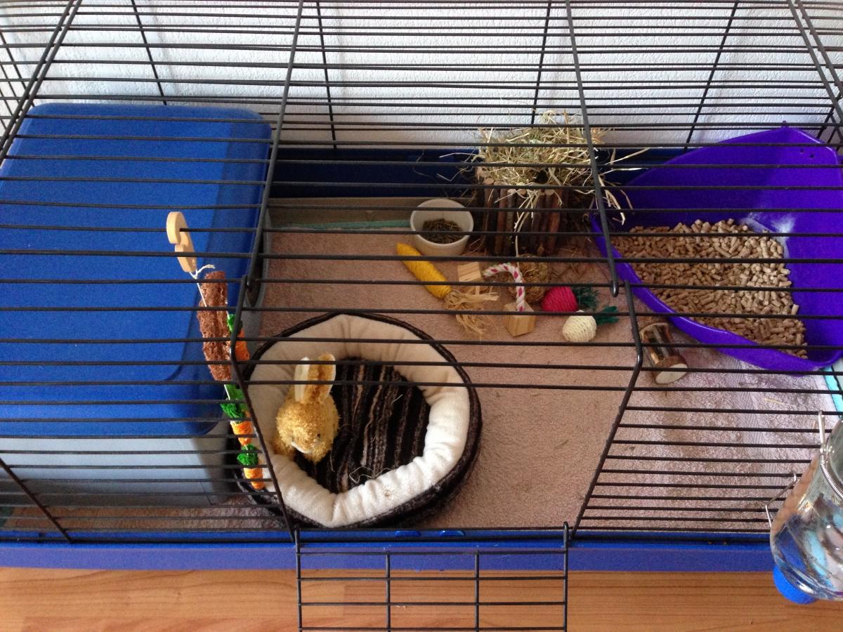 Cage a lapin avec litiere