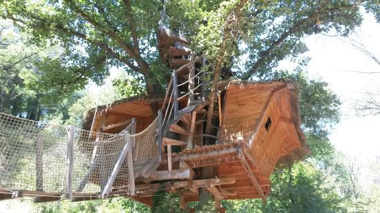 Cabane arbre var