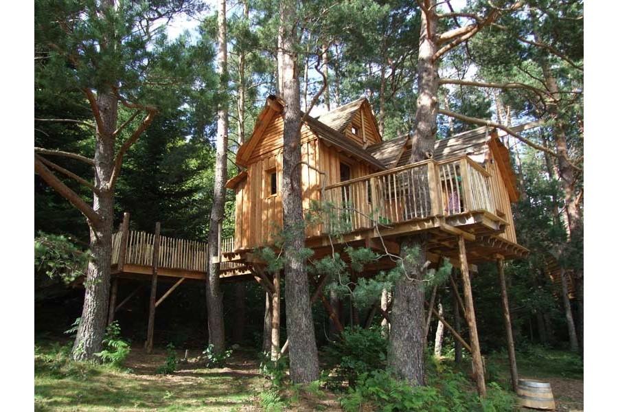 Cabane arbre vosges