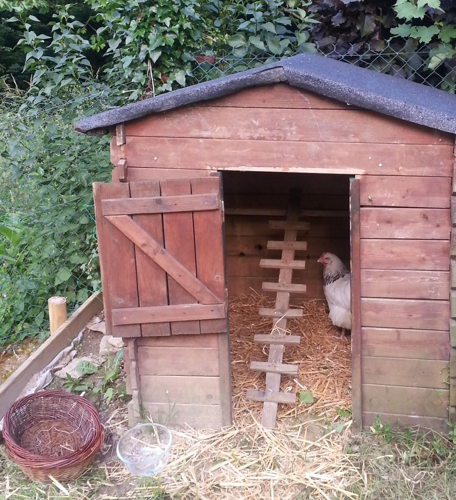 Cabane a poule en bois