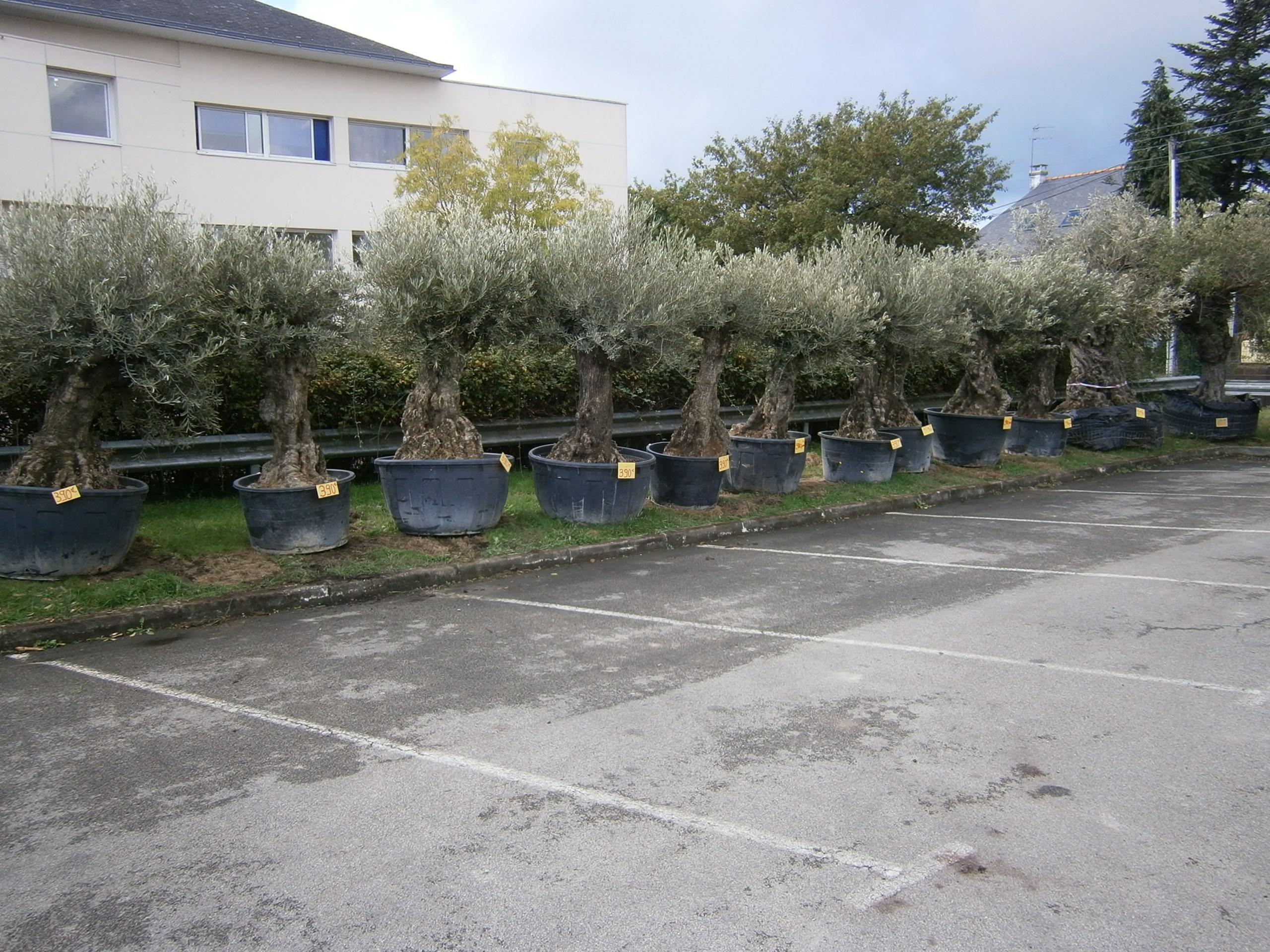 Salon de jardin au fil des lots