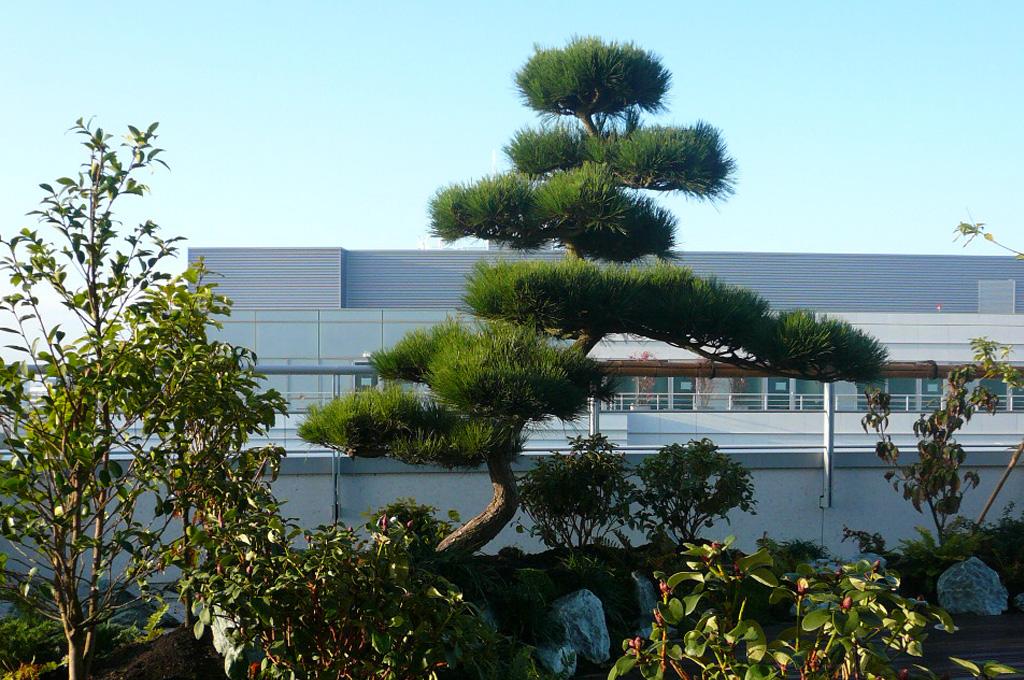 Terrasse japonais paris
